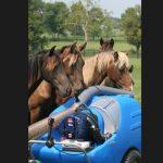 Aspirateur-et-chevaux