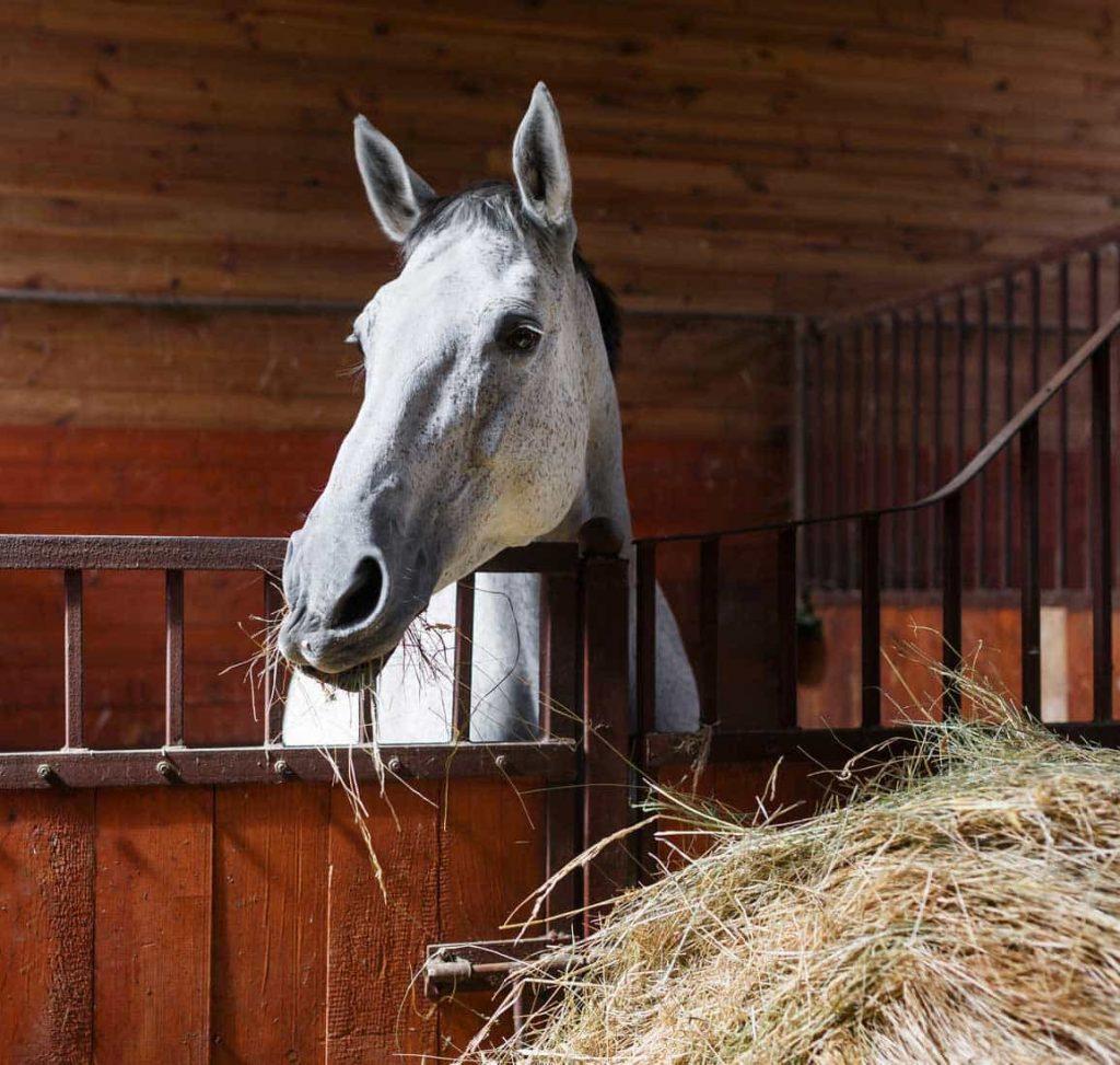cheval et foin - VLC Europe