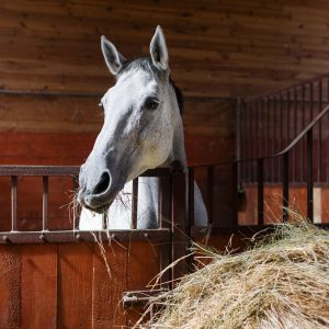cheval avec foin - VLC Europe