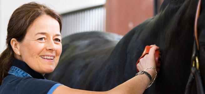 soins du cheval - VLC Europe