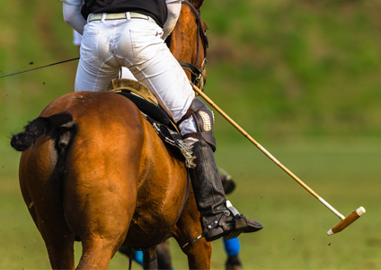 Soins du cheval au travail